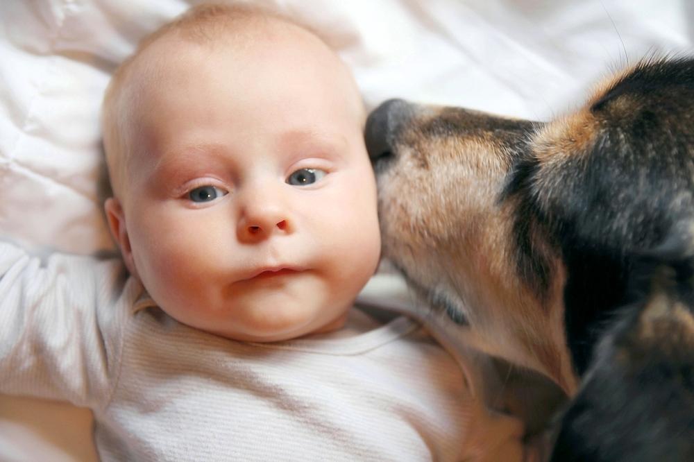 Experten warnen: So gefährlich kann es sein, wenn ein Hund dein Baby im Gesicht ableckt