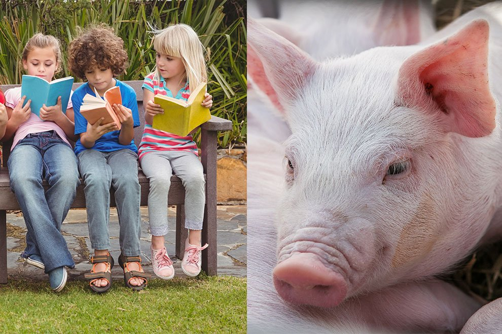 """""""Auf mich warten schon die Spezialisten"""": Kinderbuch übers Tiere-Schlachten wird verboten"""