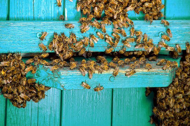 Ästhetisch oder gefährlich: Dieses Schwangerschafts-Shooting mit 20.000 Bienen ist echt gruselig