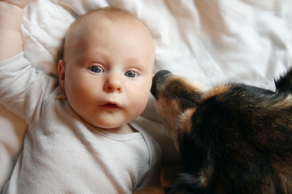 Babys und Hunde: So funktioniert das Zusammenleben
