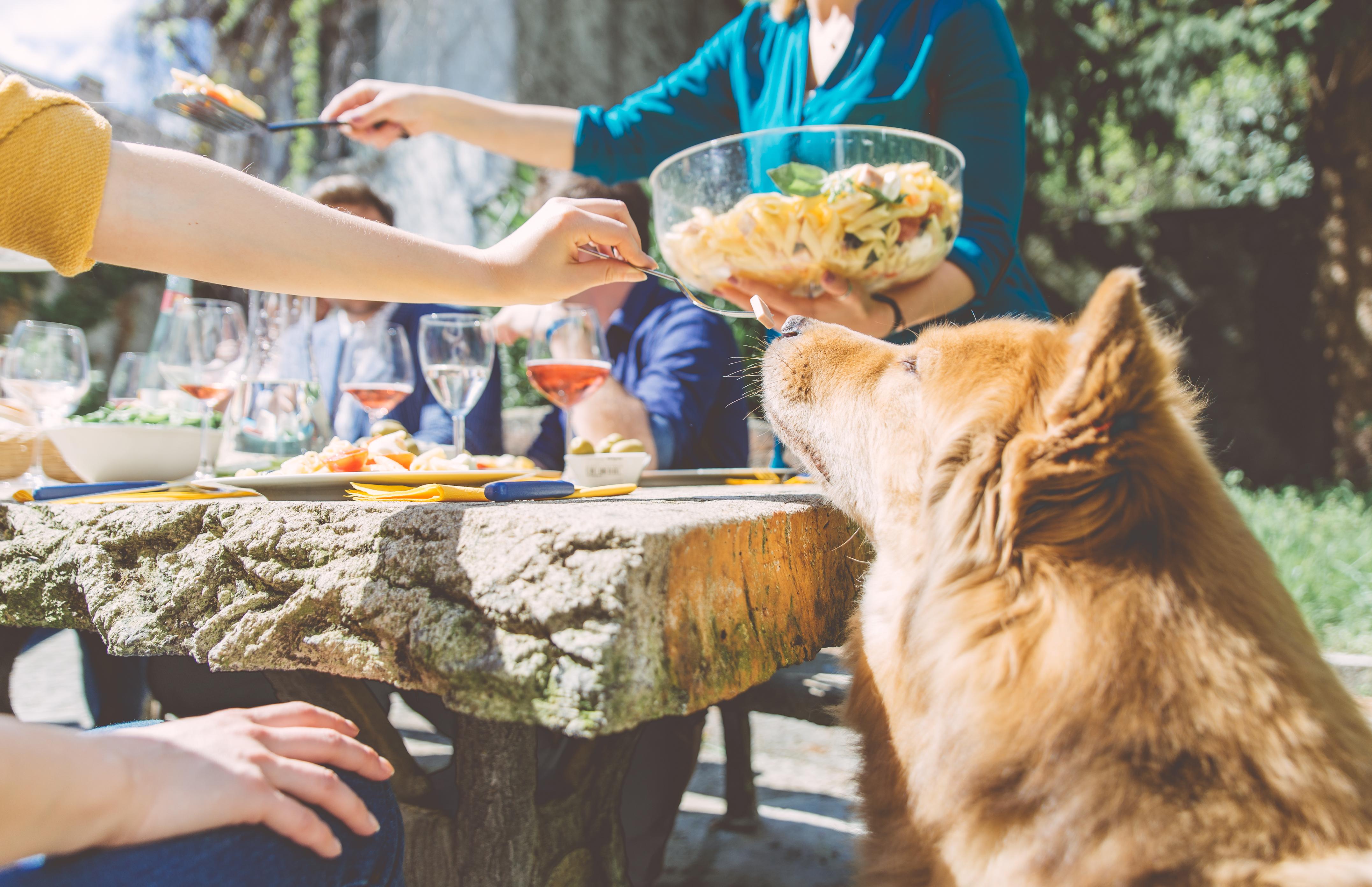 Warum der Hund nicht beim Familientisch dabei sein sollte
