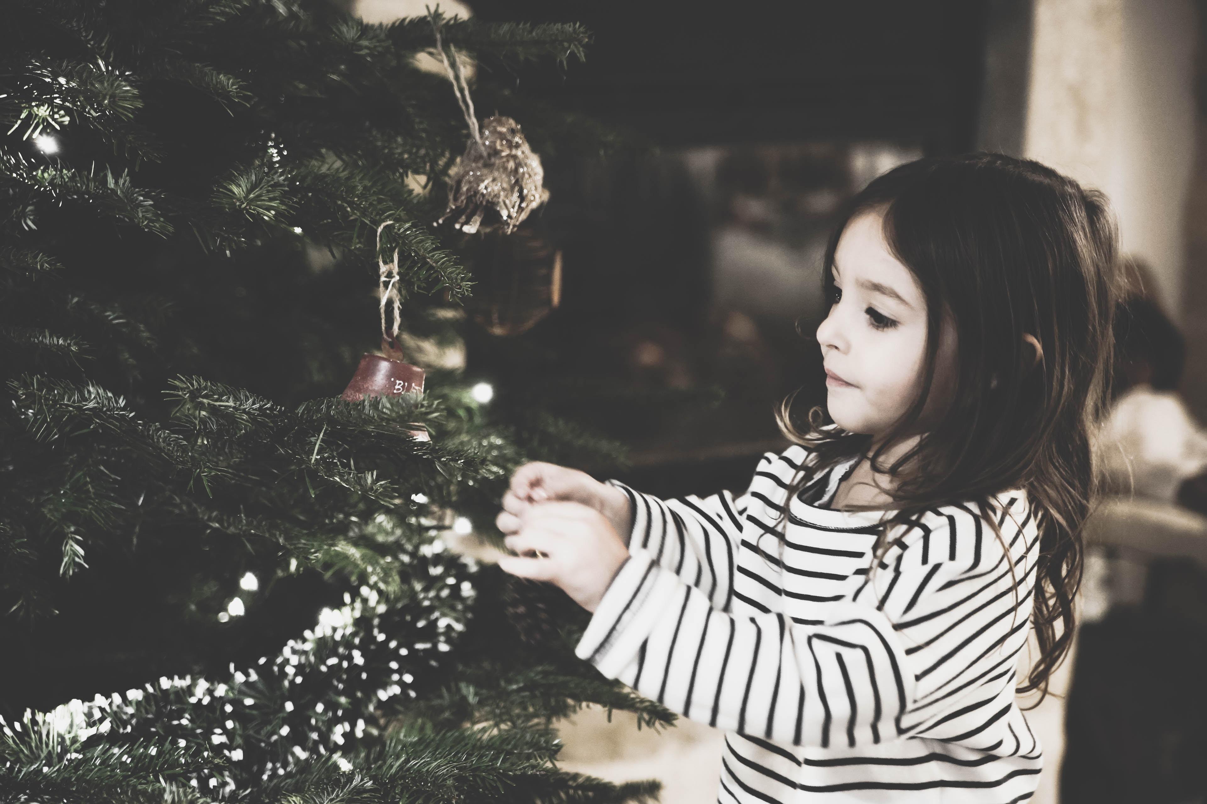 Weihnachtsbaum: So holt ihr euch keine Zecken ins Haus!