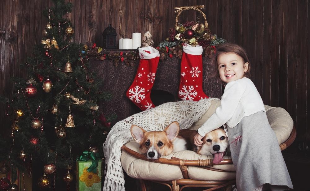 Tierschützer warnen vor Tieren als Weihnachtsgeschenk