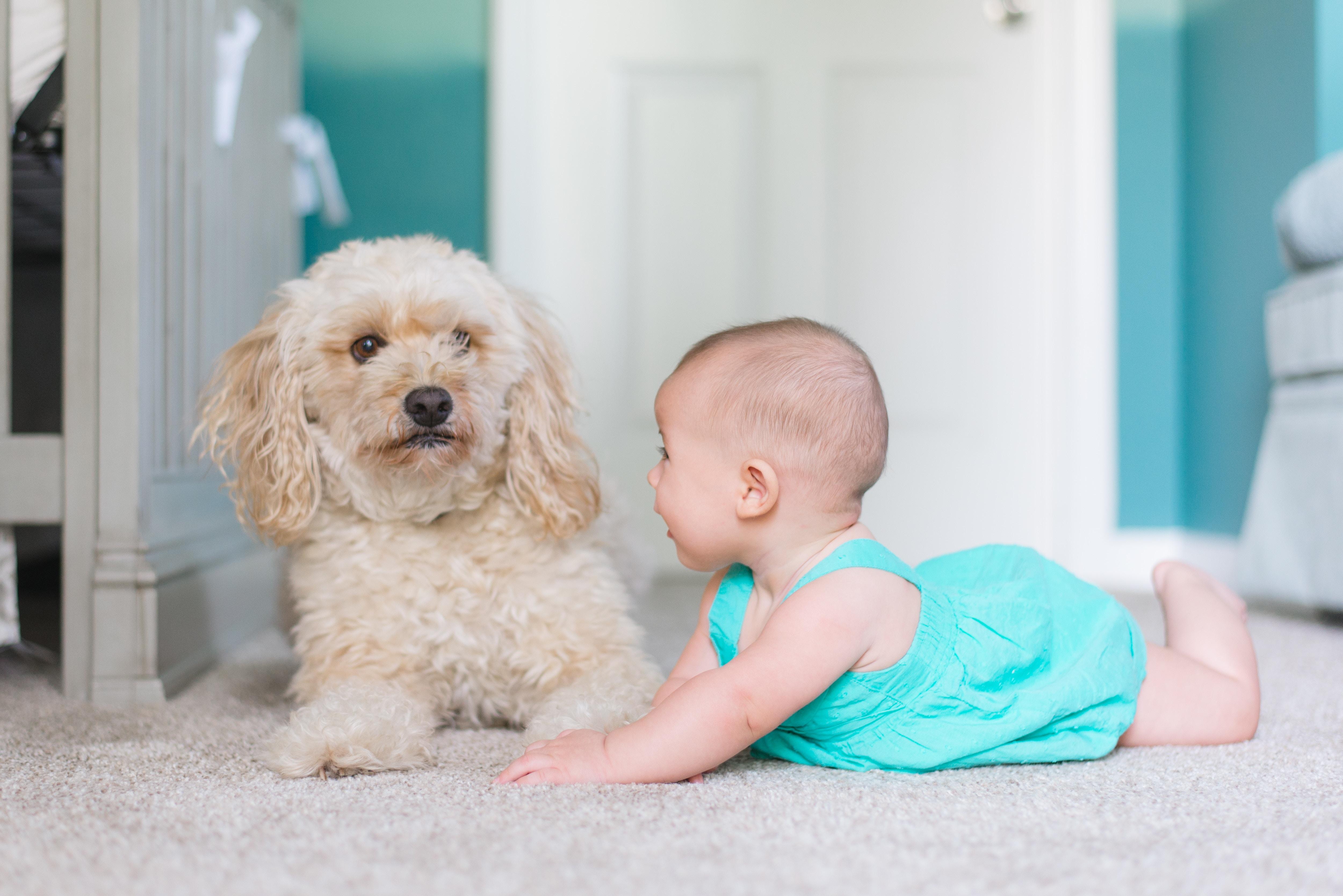 Haustier und Baby: 5 Dinge die du beachten musst