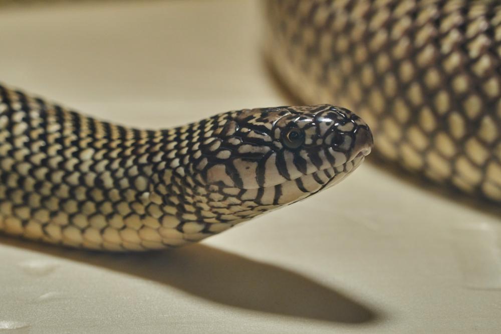 Mutter entdeckt giftige Schlange in der Jausenbox ihres Kindes