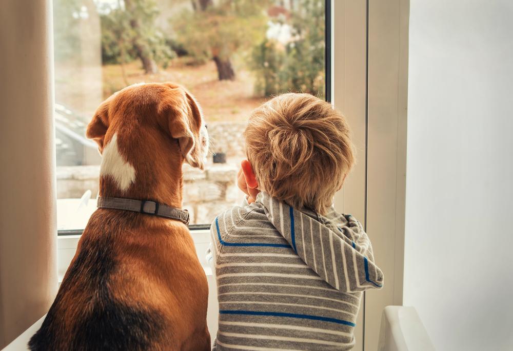Diese Haustiere sind für Kinder am besten geeignet