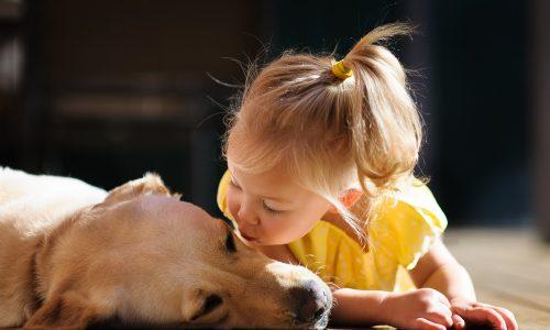 Warum Hunde Kinder beißen und der Hund keine Schuld trägt
