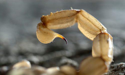 Mutter bestellt ihrem Sohn aus Versehen lebenden Skorpion