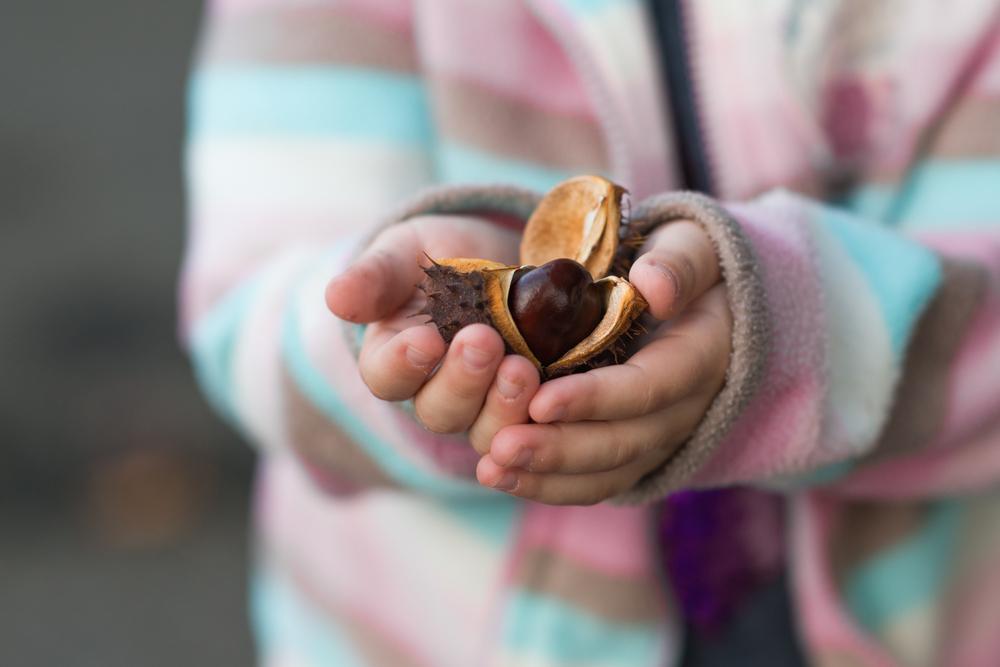 Kastanien – die kleinen Wunderkugeln